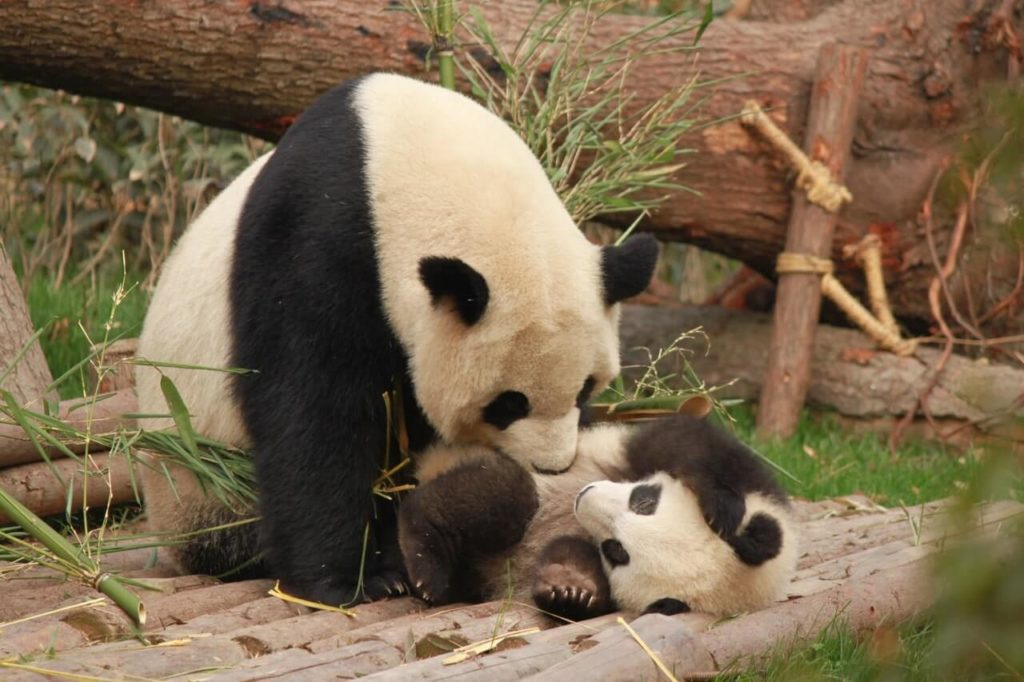 Vienna Austria with kids zoo panda